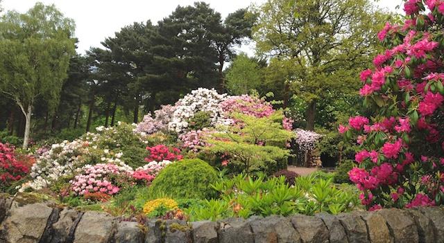 Lea Garden Rhododendrons